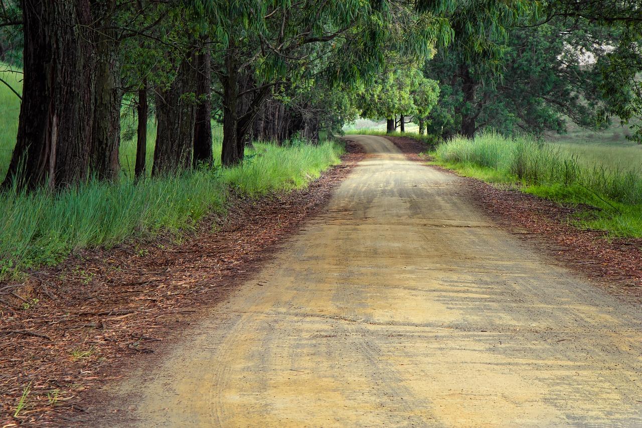 森林の脇道