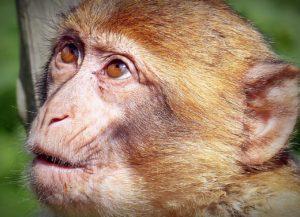 驚いた顔をした猿