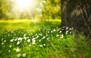 白い花と太陽