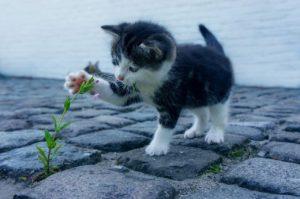 植物を触るネコ