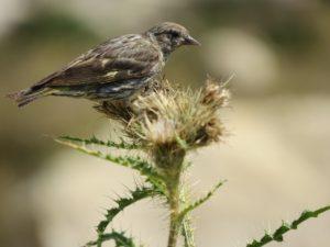 植物に止まる鳥