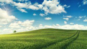 草原に光が差す