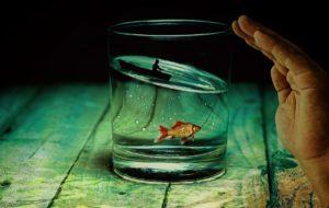 金魚向かって手をかざす