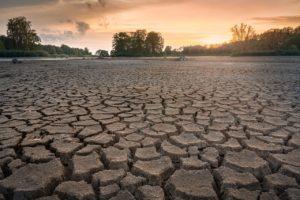 干からびている土地