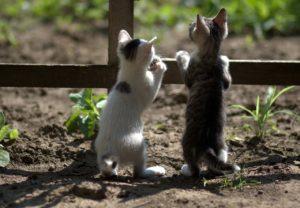 柵から覗く2匹の猫