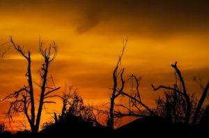 枯れた木々