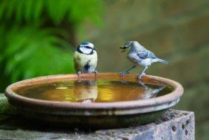 二羽の鳥が向き合う