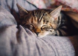 クッションで寝るネコ