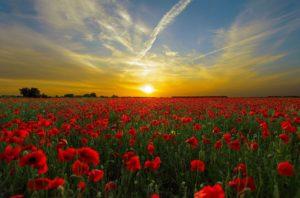 花畑と夕日